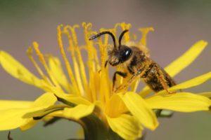 Wildbienenhotel-Führung für Kinder und Eltern